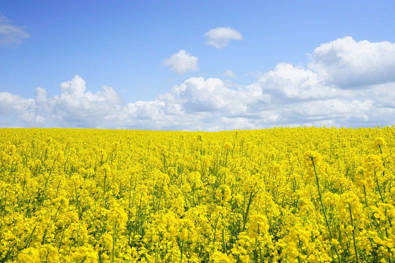 Polska jest krajem o dużym potencjale w obszarze biogospodarki