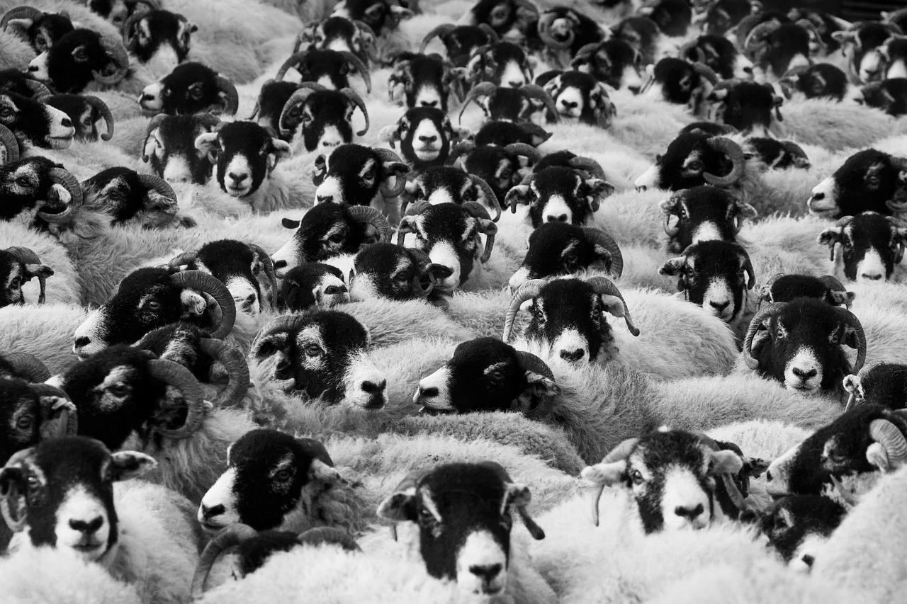Obcięcie rządowych dotacji na hodowle może zagrozić ich opłacalności