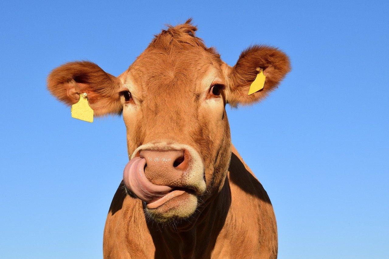 Resort rolnictwa zapowiada wsparcie dla hodowców bydła