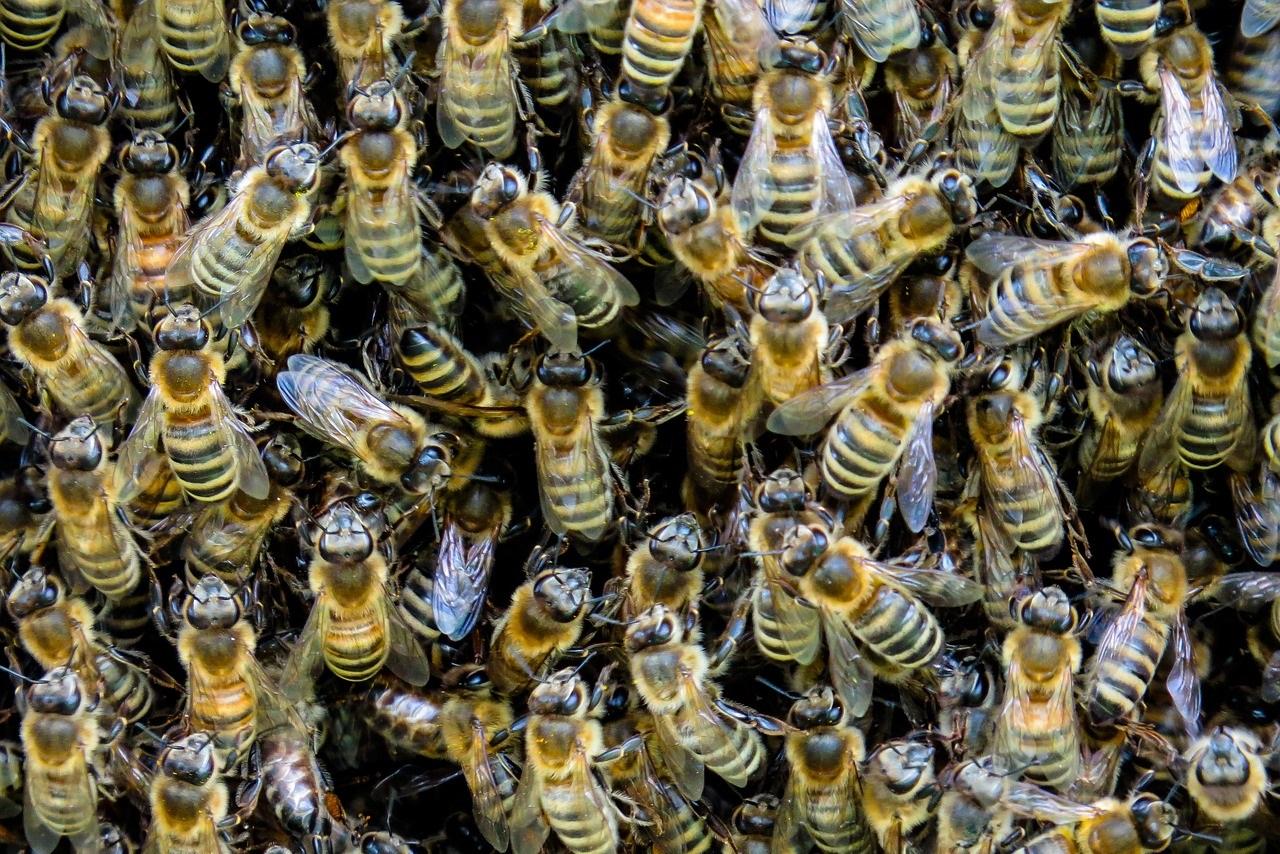 W Polsce przybywa pszczół i pszczelarzy amatorów. Rośnie również spożycie miodu