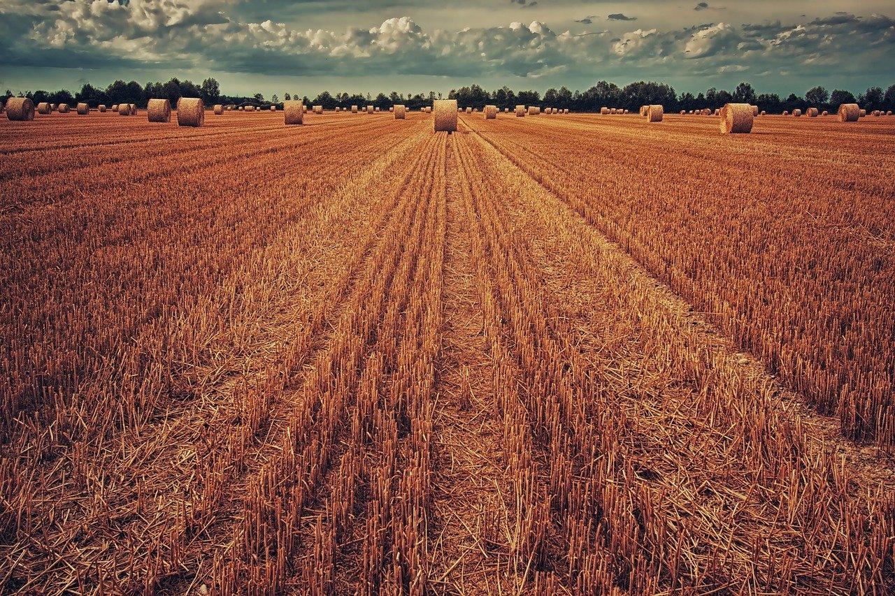 Zamień uprawę podłużną na pasową,a odwracanie gleby na spulchnianie