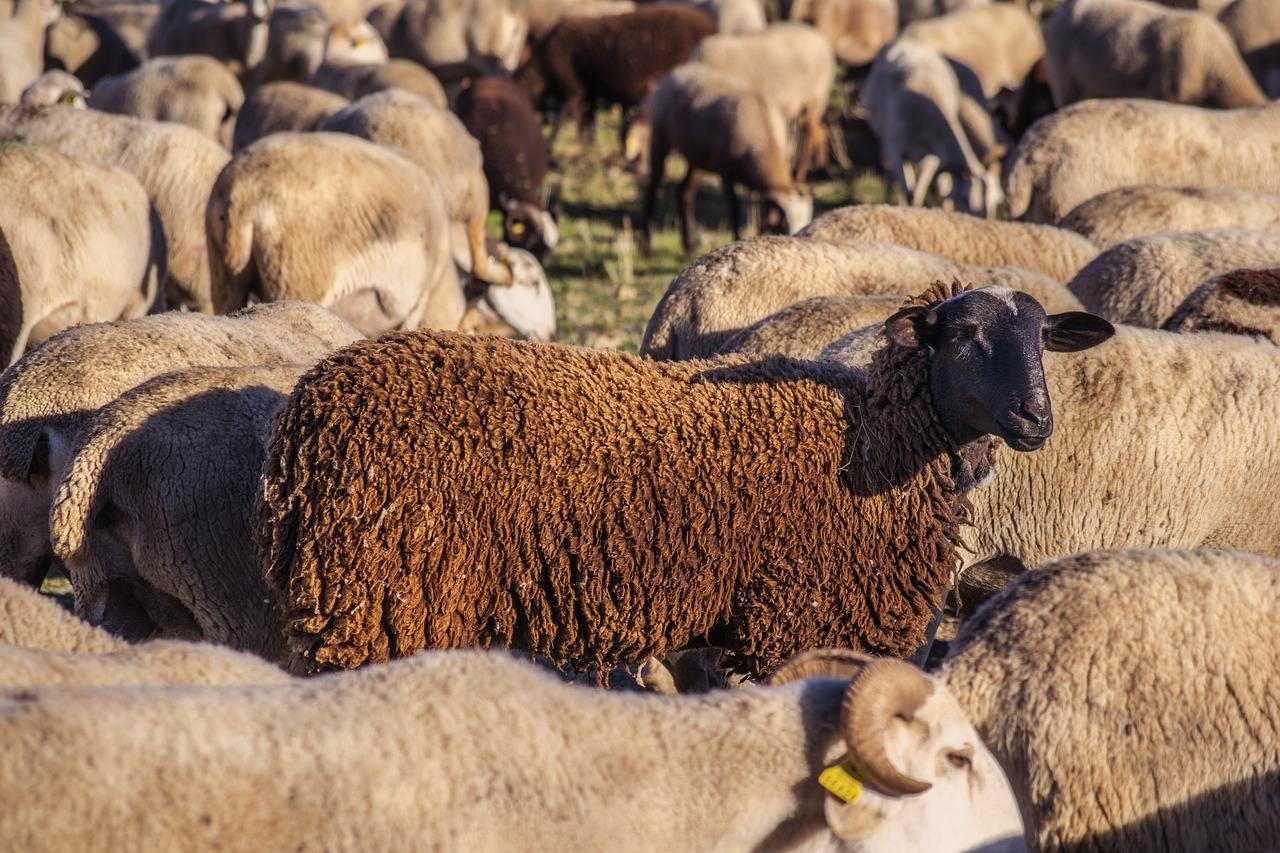 Czym jest i jak weryfikować dobrostan zwierząt?