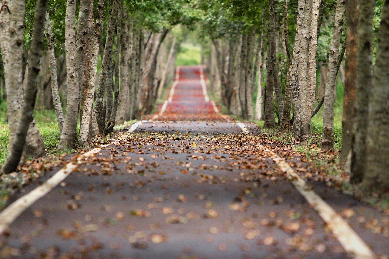 Bielenie drzew – kiedy, czym i jak to robić?