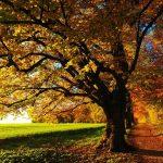 Wycinka drzew a przepisy