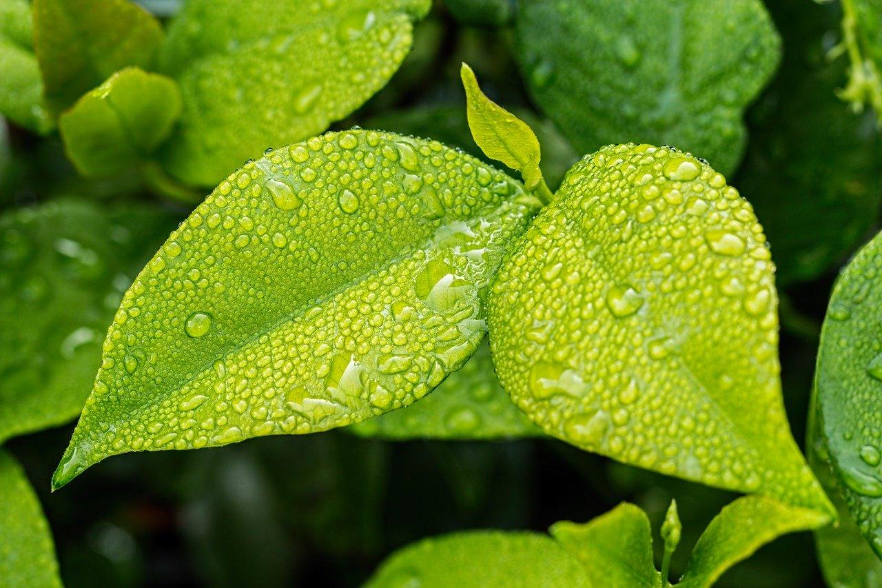 Dlaczego warto wybierać produkty ekologiczne?