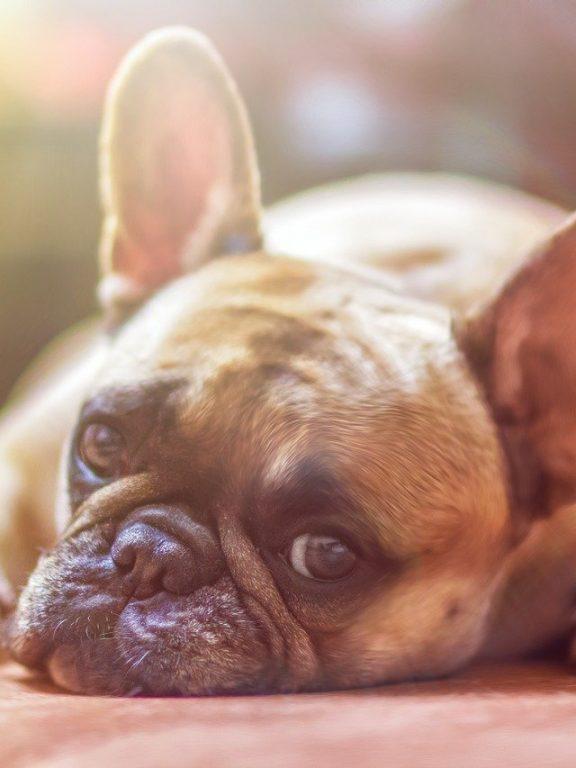 Jaką karmę polubi Twój pies?